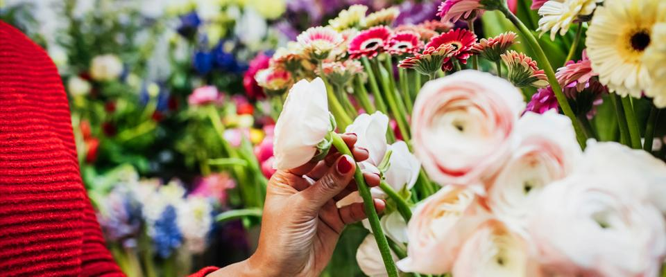 kobieca dłoń wyciągająca białą różę zbukietu z