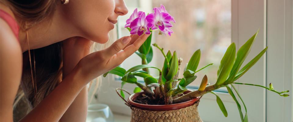kobieta wąchająca fioletowy kwiat